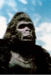 King Kong II king kong lives 1986 real : John Guillermin COLLECTION CHRISTOPHEL