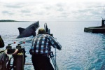 Jaws - Behind the scenes photos (3)